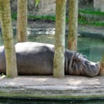 how to sleep better after daylight savings